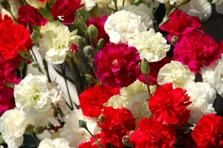 carnations bouquet closeup red and white blooms