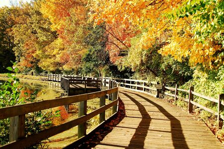 among: wooden walkway among colorful autumn trees and pond reflection