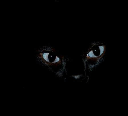 eerie blue cat eyes closeup black background poster Stock Photo - 7685071