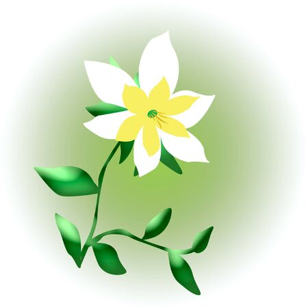 pale yellow and white flower on soft green background illustration