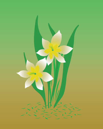 pale yellow and white daffodils on background illustration