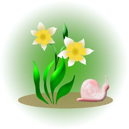 yellow daffodils and pink snail on background illustration Stock Photo