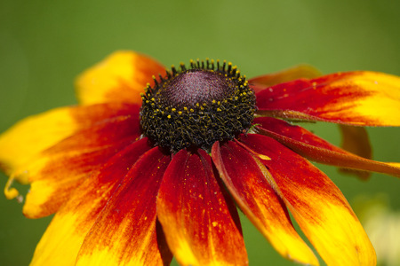 Yellow and red-petaled flower in close-up photography LANG_EVOIMAGES