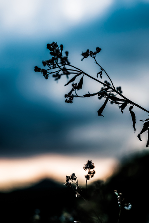 Silhouette of leaves during daytime