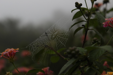 close-up photography of spider web Stok Fotoğraf