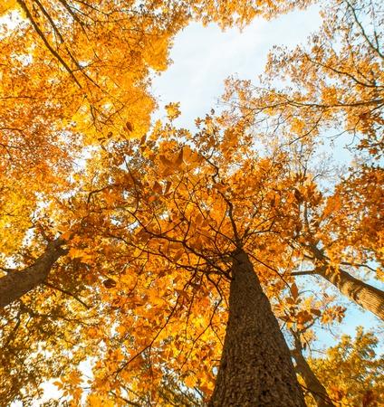 brown trees 写真素材