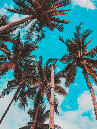 coconut trees Stock fotó