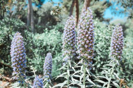 bunch of lavender flower
