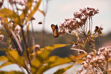 butterfly in a plant
