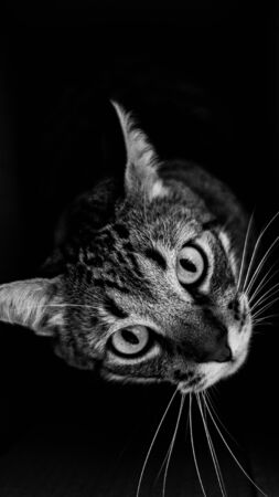 grayscale photography of tabby cat looking up