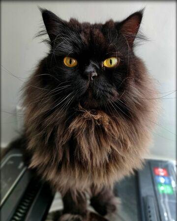 Ferocious cat looking
