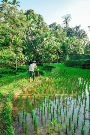 man holding stick standing beside rice field