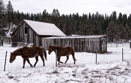 farm horses in snow