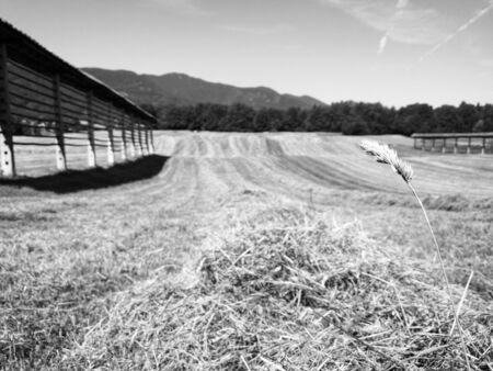 hay pile by cut field Imagens