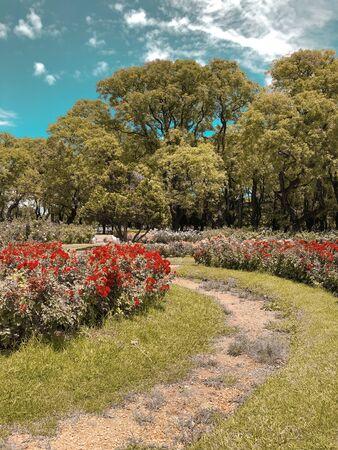 view of garden during daytime Standard-Bild - 124975139