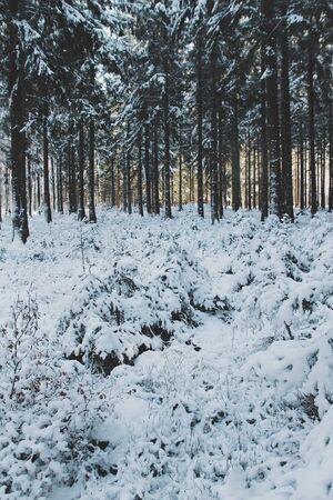 snow covered forest Reklamní fotografie