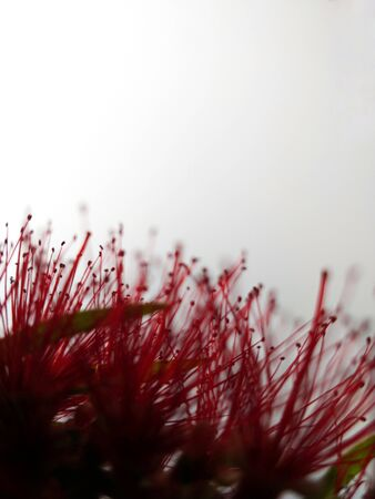 pink-petaled fl;ower Standard-Bild - 124967599