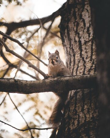 white and gray squirrel on wood branch Imagens