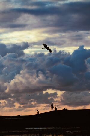 silhouette photography of people under flying bird