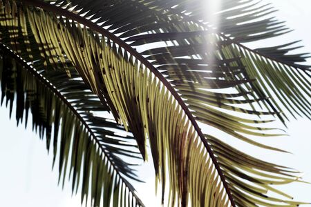 Sunlight streaming through a bunch of palm fronds