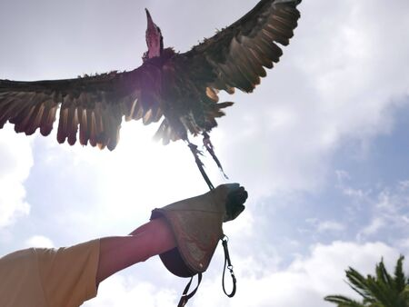 Bird spreading its wings in flight being held by a person.
