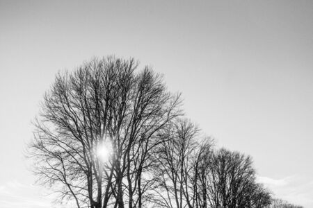 gray-scale photo of bare trees