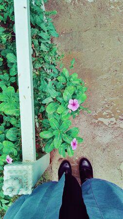blooming purple periwinkle flowers