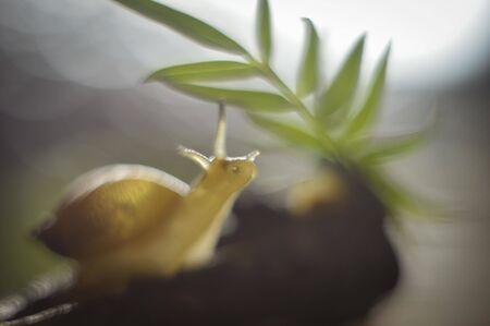 gray snail Stock fotó