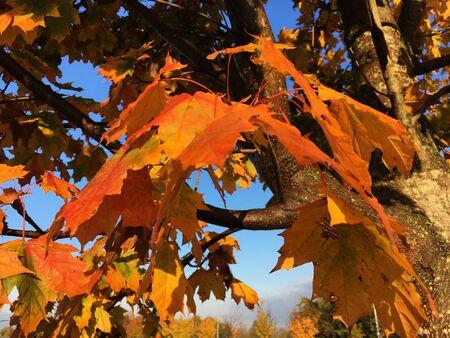 brown and orange tree during daytime