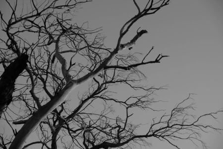 low-angle photography of bare tree