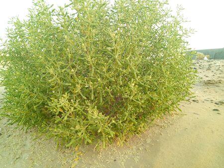 green-leafed plant Stock fotó