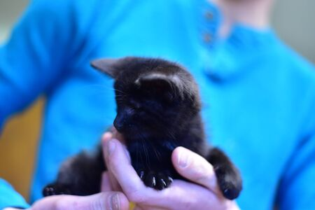 long-coated black kitten Banco de Imagens