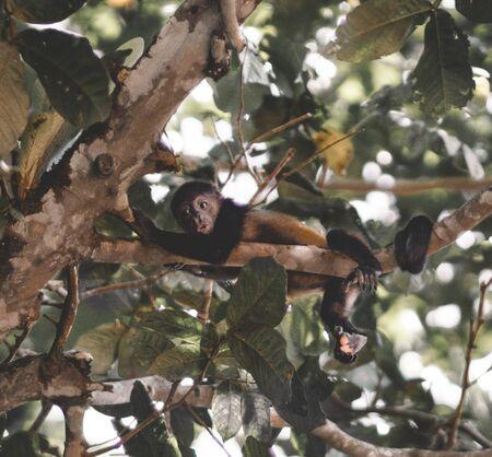monkey on tree brunch