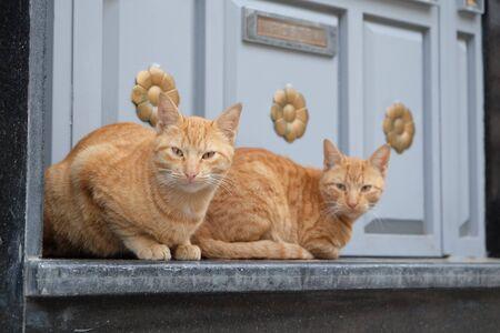 two orange tabby cats