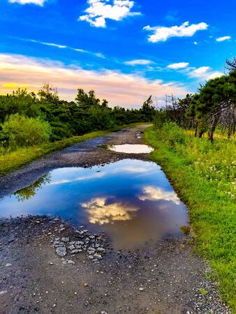 puddle on dirt road beside green grass