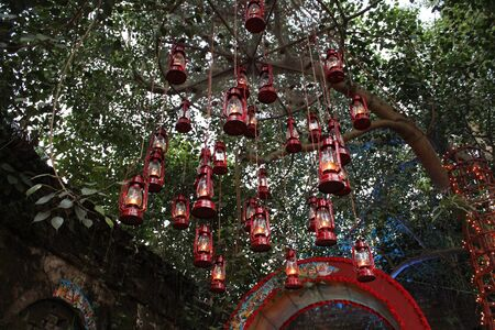 red lantern lamp hang on tree outdoor during daytime