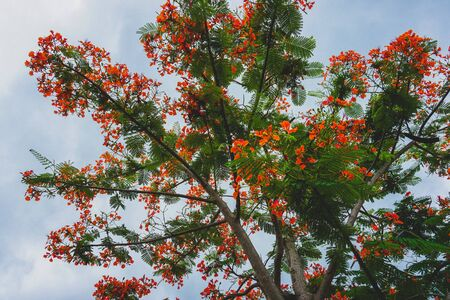 low angle view of red flower tree