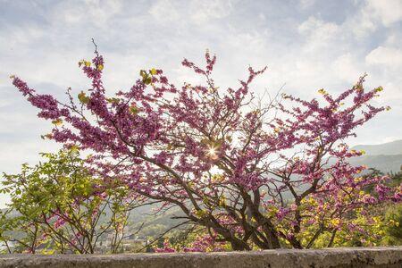 pink petaled flower Reklamní fotografie