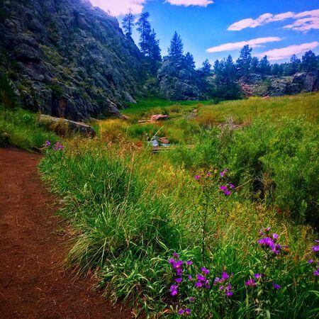Pathway near plant field