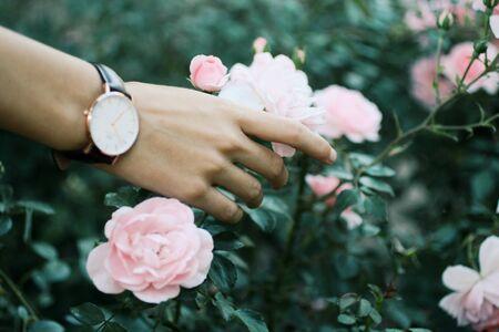 person holding pink petaled flowers Banco de Imagens