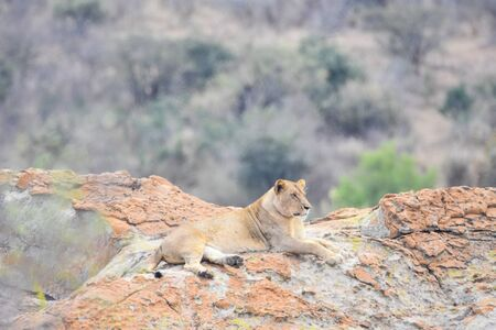lioness in a rock during daytime Imagens