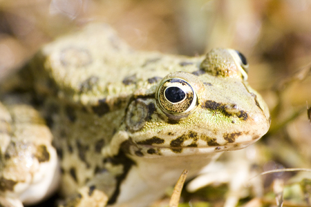 Frog close up. Focus on eye. Stock Photo