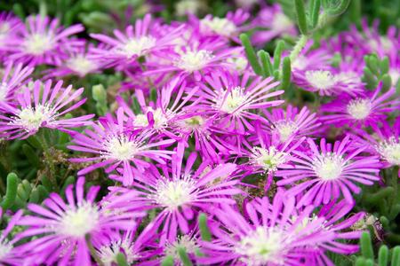 Purple flowers close up.