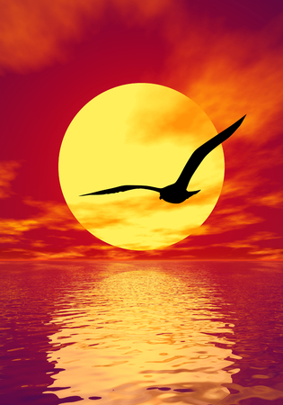 Gull silhouette and scarlet sunset