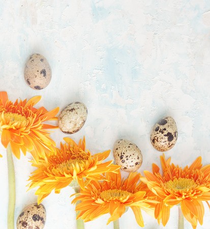 brigt: Orange gerbera with easter quail eggs on brigt background. Holiday frame. Text space