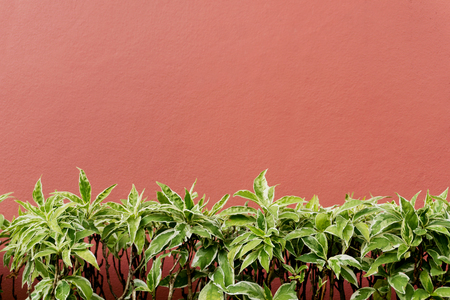 Short green tropical plants against red concrete wall. Text space 写真素材 - 122107109