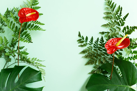 Red Anthurium flowers, fern and monstera leaves on green background. Summer mockup Stock Photo