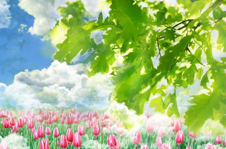Green leaves with blue cloudy sky and meadow tulips photo