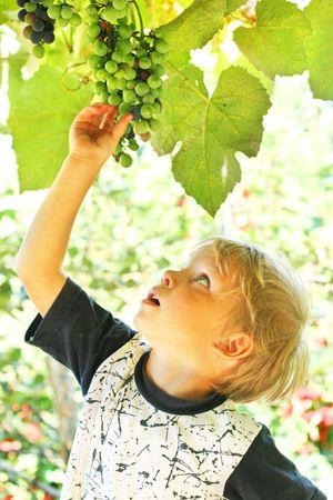 bunchy: Little boy reach for grape