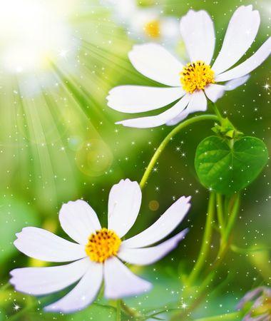 Magic spring day